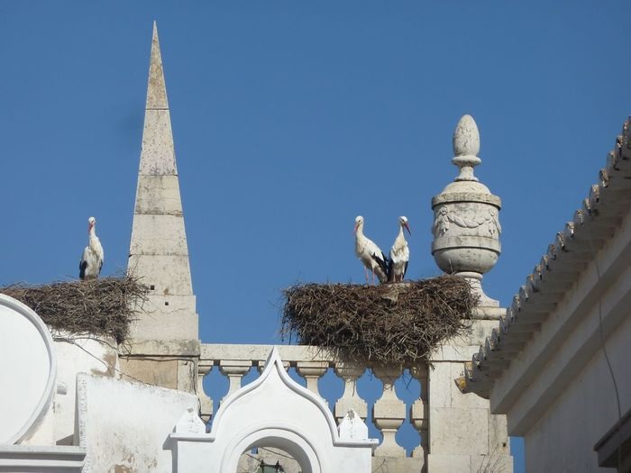 Low angle view of seagulls perching on building against clear sky