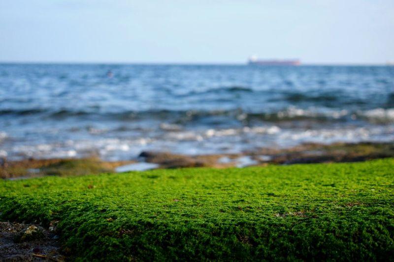 Water Sea Grass