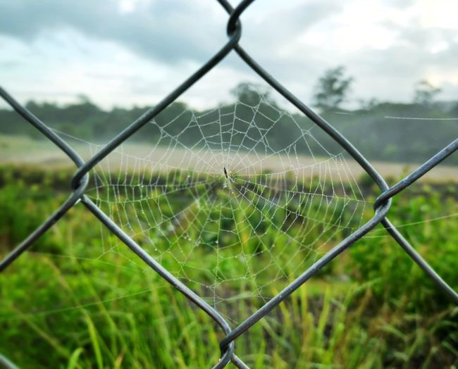 Close-up of spider web on chainlink fence