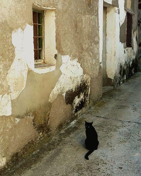 Cat Window Animal Themes Domestic Animals Pets