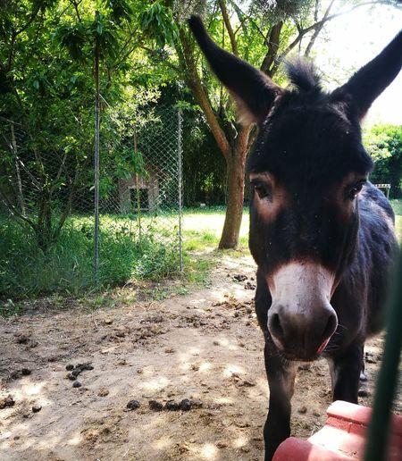 Donkey Animal Cutness Love Animals Pets No People Outdoor Eyembestpics