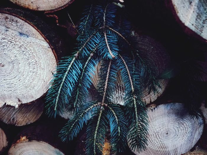 Log Pile Of Wood Hanging Branch Leaves🌿 Wood EyeEm Nature Lover Close-up Forestry Industry