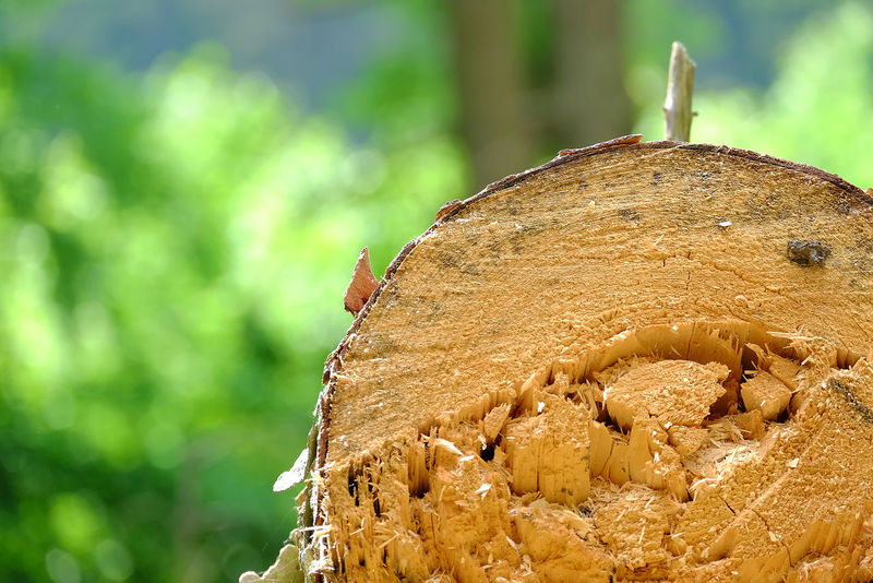Tree Log Brown Close-up Day Focus On Foreground Growth Harvesting Nature No People Outdoors Plant Sawed Off Tree Tree Trunk Trunk Wood - Material