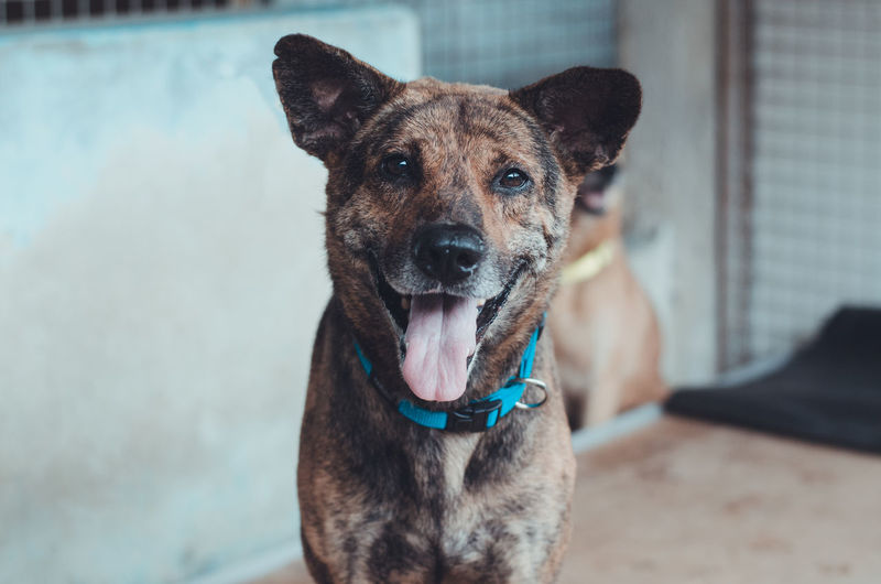 Dog portrait Animal Themes Day Dog Dog Portrait Domestic Animals Focus On Foreground Looking At Camera Mammal Mix Breed Dog Multibreed No People One Animal Outdoors Pets Portrait Smiling Smiling Dog Tongue Out