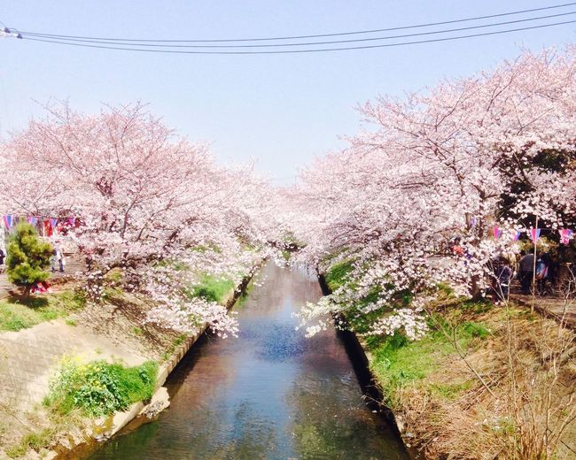 毎年この場所から EyeEm Hello World Sakura Spring Is Coming  Japan Hello World EyeEm Nature Lover EyeEmBestPics