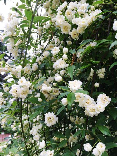 Green Flower Porn Trees Garden Garden Photography Rosé Roses Kyoto