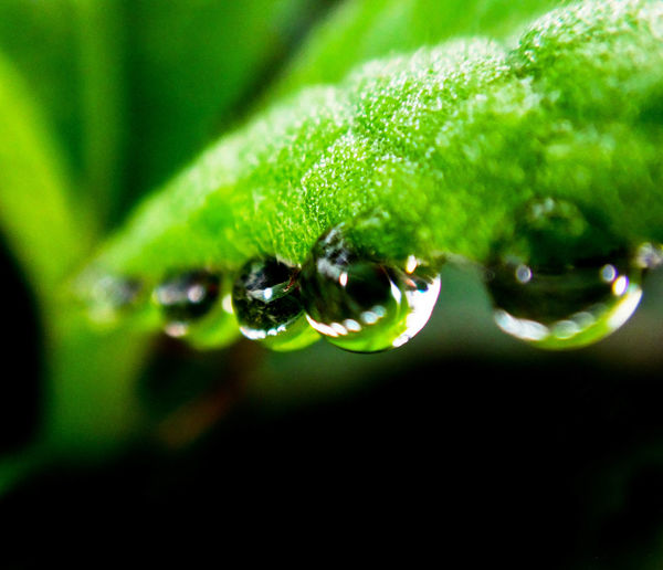 water droplets in line.... Macro Macro Photography Closeupshot Close Up Close Up Photography Waterdrops Water Droplets Macro_water Nature Photography Nature Sony Sonyphotography Eyeem Philippines EyeEm Best Shots From My Point Of View Fresh On Market August 2016