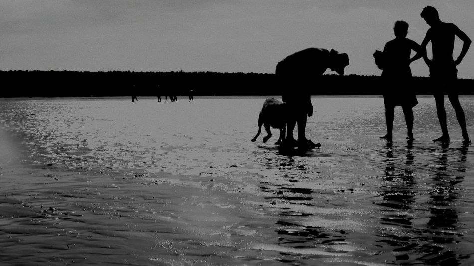 Silhouette Water Dog People Pet Portraits Hector Sea Holkham Beach