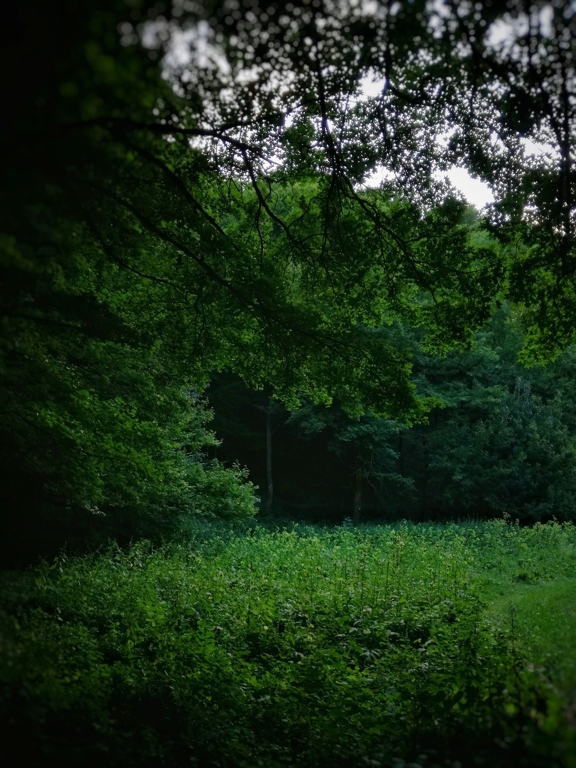 Green Color Tree Nature Outdoors No People Beauty | EyeEm