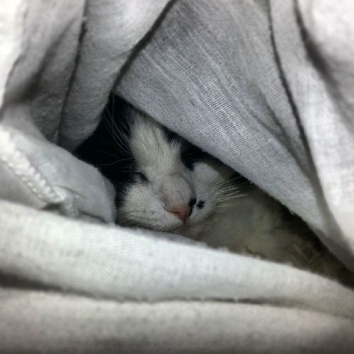 Snuggly Cat Cats Willowcat Picoftheday awsomepic
