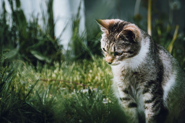Pix Animal Themes Animal Mammal One Animal Feline Cat Domestic Animals Vertebrate Pets Domestic Domestic Cat Plant No People Grass Focus On Foreground Day Nature Land Field Whisker Outdoors Animal Eye Portrait Close Close-up Grass Green Nikon D7500 Toronto EyeEm Best Shots EyeEmNewHere EyeEm Nature Lover EyeEm Gallery EyeEmAnimalLover
