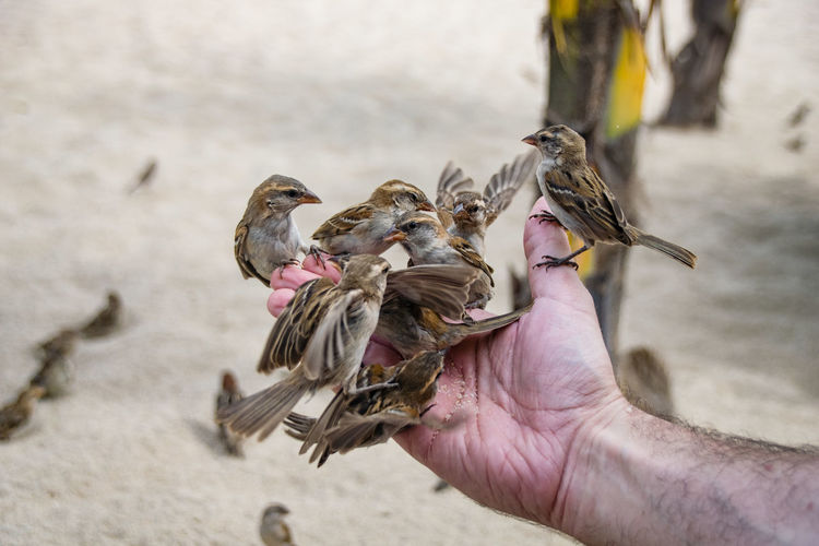 Animal Wildlife Animals In The Wild Beak Bird Close-up Day Focus On Foreground Food Holding Human Body Part Human Hand Lifestyles Men Nature One Animal One Person Outdoors People Real People Sparrow Spread Wings