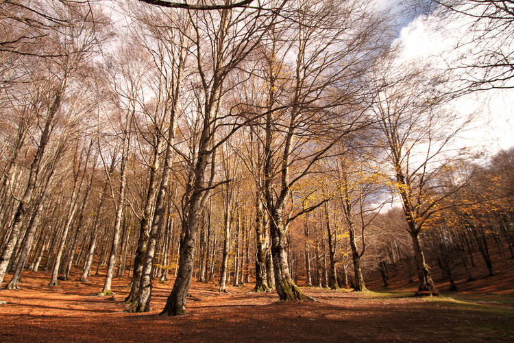 Autumn Bare Tree Beauty In Nature Day Forest Nature No People Outdoors Sky Tree Montelivata