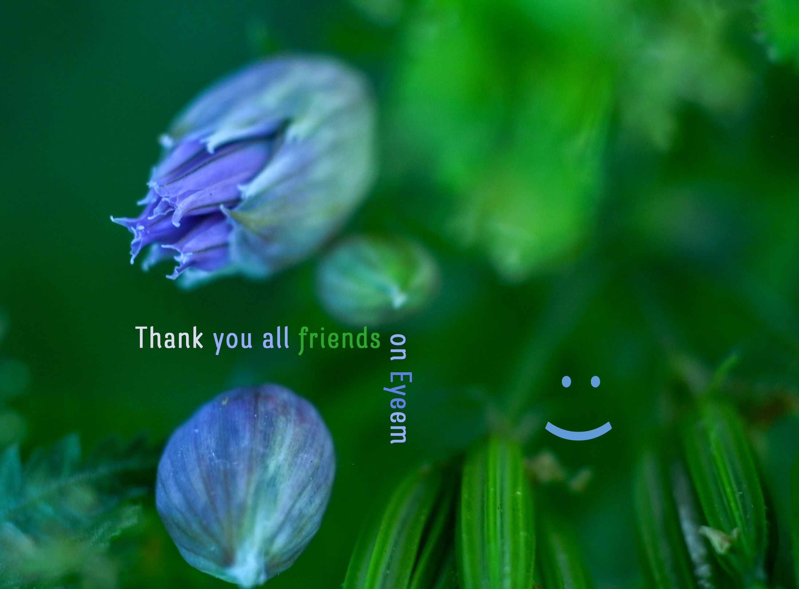 plant, flowering plant, freshness, flower, beauty in nature, growth, fragility, vulnerability, close-up, no people, petal, nature, text, green color, western script, purple, communication, flower head, inflorescence, selective focus