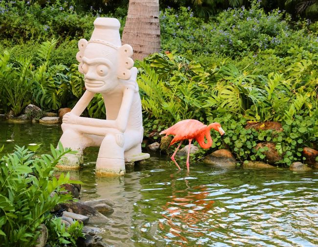 Flamingo Water