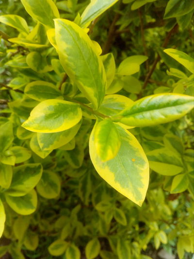Green Color Close-up Plant No People Outdoors Leaf