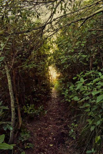 Tree Nature Backgrounds No People Growth Full Frame Outdoors Day Beauty In Nature Close-up Coast Beauty In Nature Nature Tree Travel Nikon D3300 Travel Destinations Scenics Nikon Landscape Jungle Tranquility Fairytale  Fairytales & Dreams Tranquil Scene
