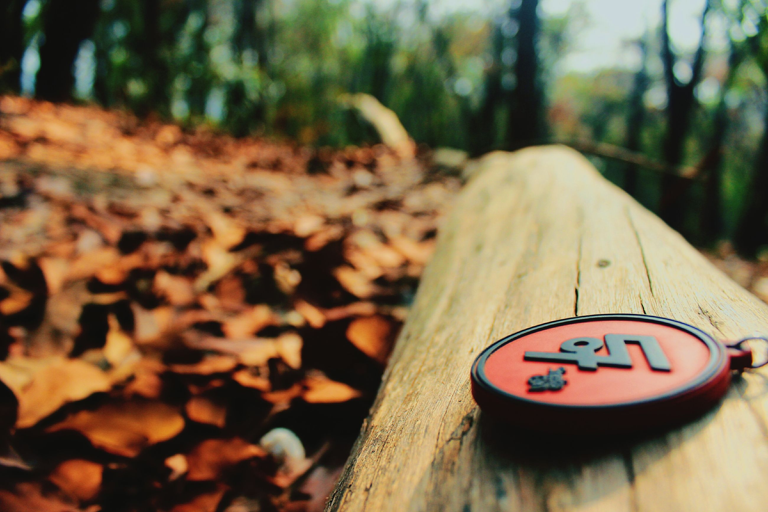 focus on foreground, close-up, text, selective focus, wood - material, communication, tree, western script, single object, forest, still life, day, no people, wooden, tree trunk, outdoors, metal, nature, wood, number