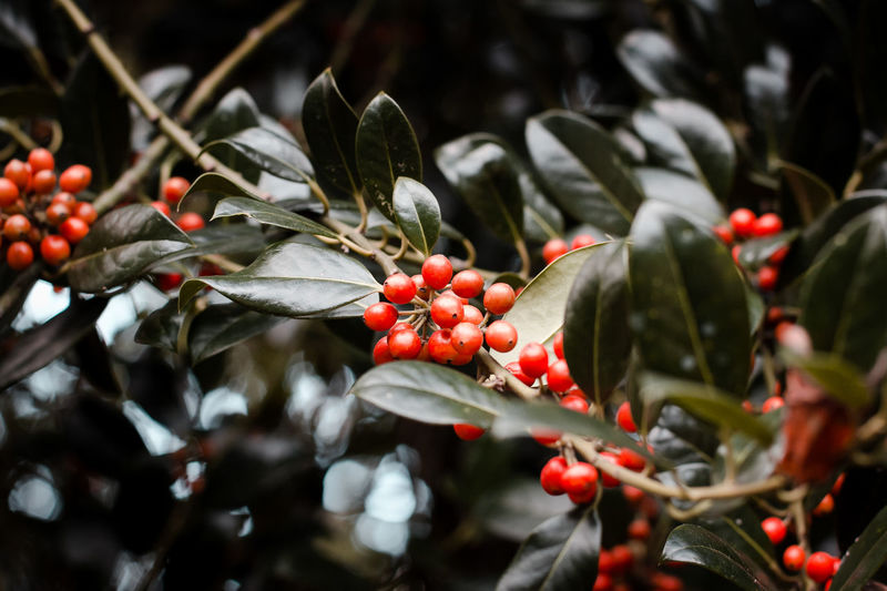Autumn Draußen EyeEmNewHere Nature Plant Planzen Beauty In Nature Berry Fruit Branch Close-up Forest Fruit Garden Garten Growing Leaf Natur Nature No People Outdoors Red Tree Wald
