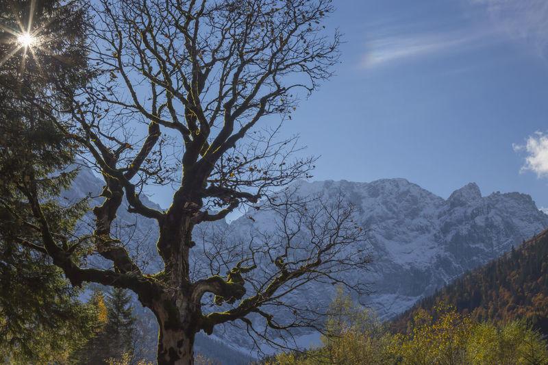 Bare tree on mountain during autumn