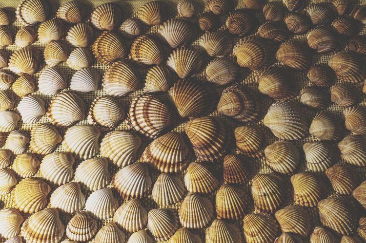 shells Shells Shell Shellsheddyphotography Shells🐚 Mare ❤ Mar Meer Conchiglie Screensaver