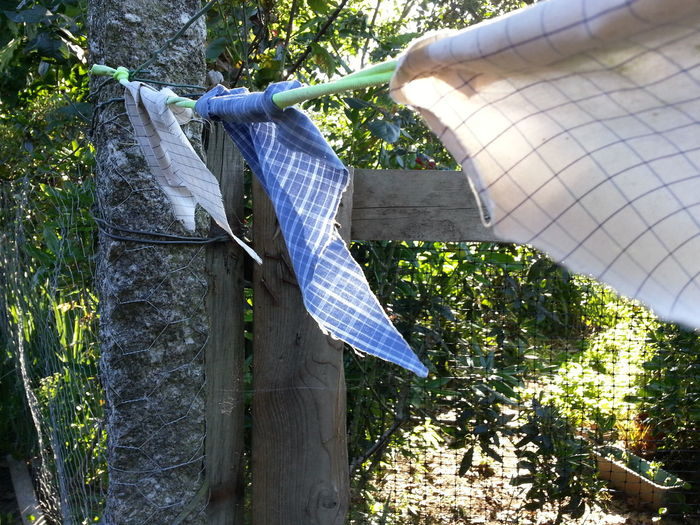 Day Outdoors Tree No People Nature Close-up Door Garden Welcome To The Garden Grass Textile Clothesline Cloth Flag Flags In The Wind