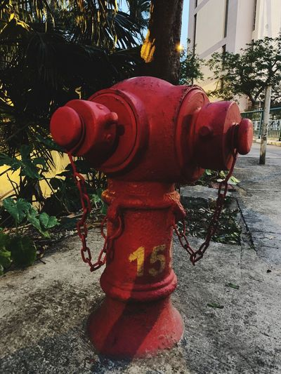 Fire Hydrant Red No People Day Protection Security Plant Architecture Outdoors Metal Street Built Structure Sidewalk