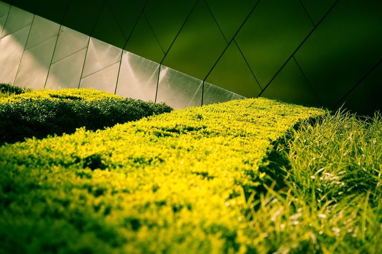 Modern Nature Architecture Sunlight Shadow No People Green Bush Metallic Paint The Town Yellow