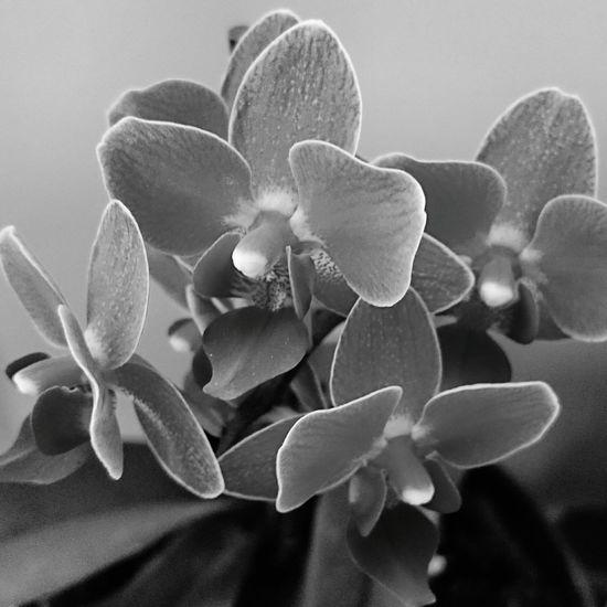 Orchids Blackandwhite Blackandwhite Photography London Shades Of Grey