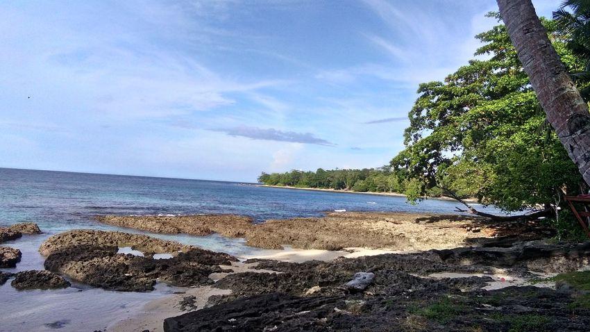 Tree Water Sea Beach Sand Sky Horizon Over Water Cloud - Sky Tide Coastline Low Tide