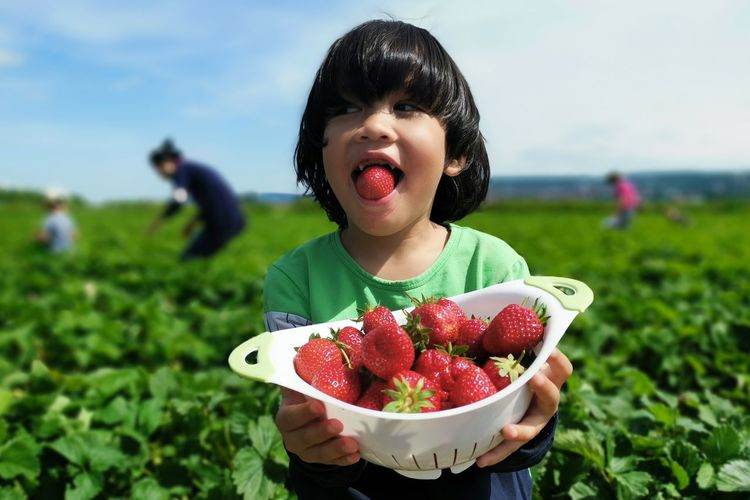Cute boy holding bowl of strawberries while standing on agricultural field