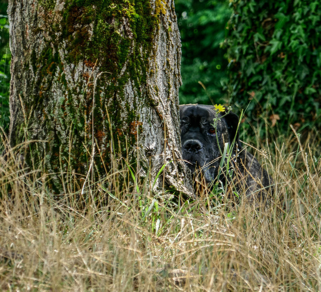 one animal, animal themes, no people, tree, nature, mammal, grass, outdoors, growth, day, tree trunk, animals in the wild, domestic animals
