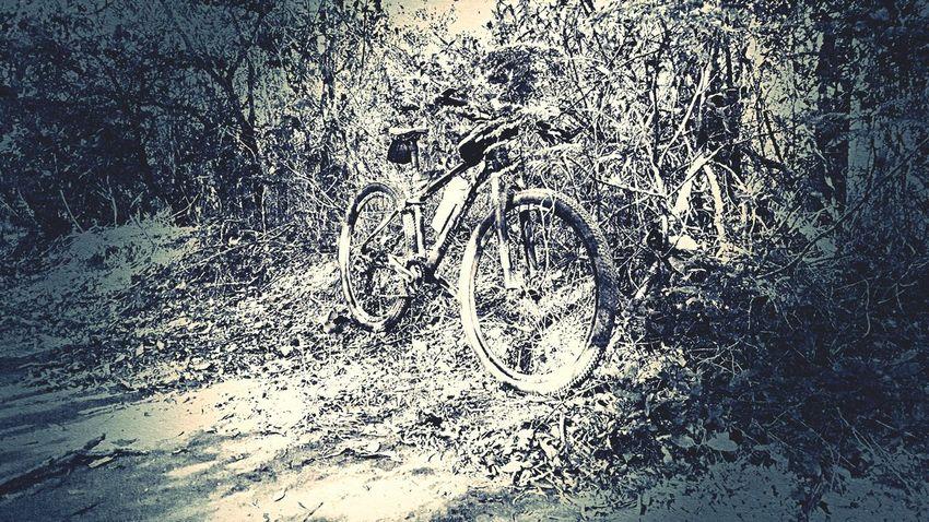 Nature No People Bicicleta Pedal Bici Bicycle First Eyeem Photo Black & White Photography Blackandwhitephotography Black&white b&p