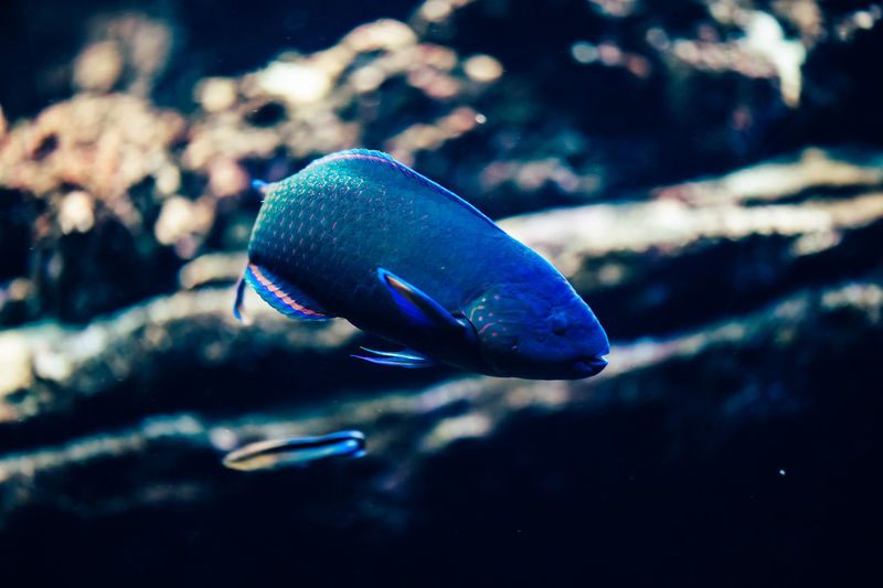 Close-Up Of Fish Swimming In Tank At Aquarium