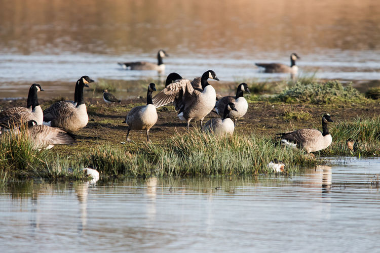 Flock of birds on lakeshore