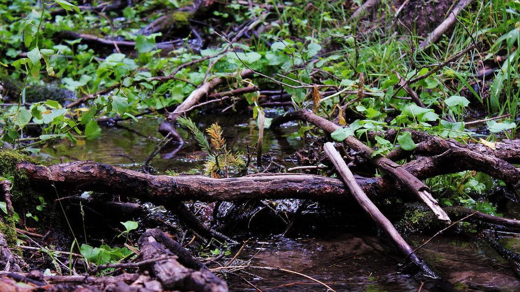 Undisturbed Water Forest Nature