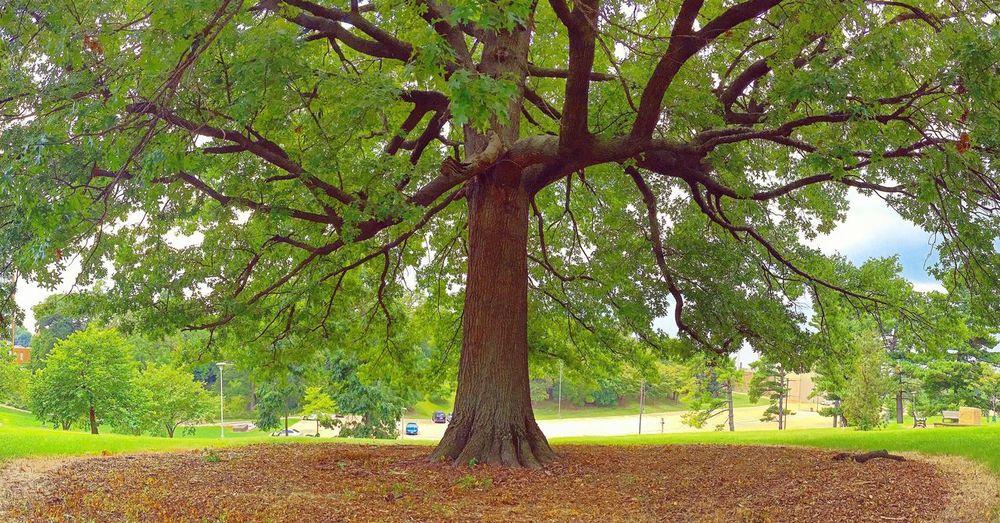 Treeofhope