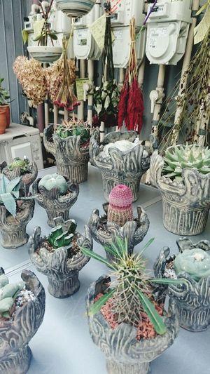 Plants Cuctus Tokyo Japan Street City Weird Odd