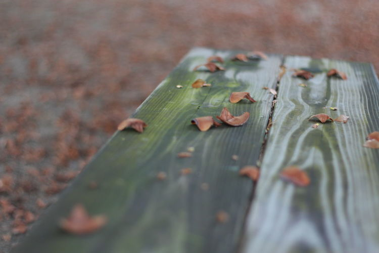 Autumn Leaves Fallen On Wooden Bench