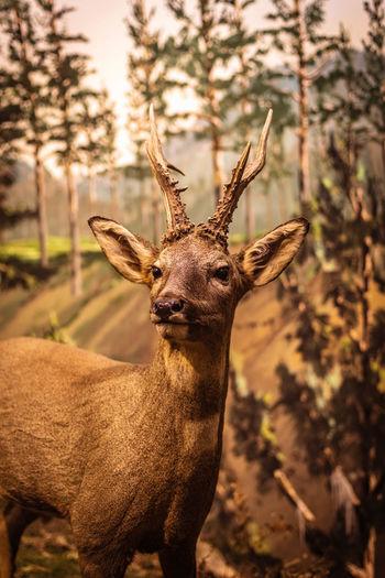 Close-up of deer on tree