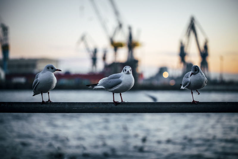 Close-up of seagulls perching on water