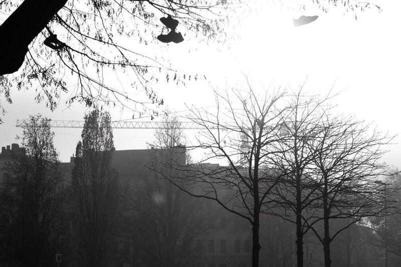 Silhouette bird on tree against sky