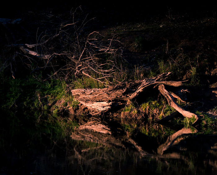 Fine art landscape of fallen trees on the river bank of Ponto Falls Campground, New South Wales, Australia Fine Art Photography Reflection Beauty In Nature Branch Dead Tree Forest Landscape Light And Shadow Mysterious Nature Night No People Outdoors River Scenics Tranquil Scene Tranquility Tree Tree Trunk Water