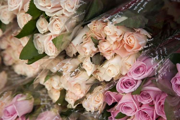 View Of Pink And Peach Colored Roses Wrapped In Plastic