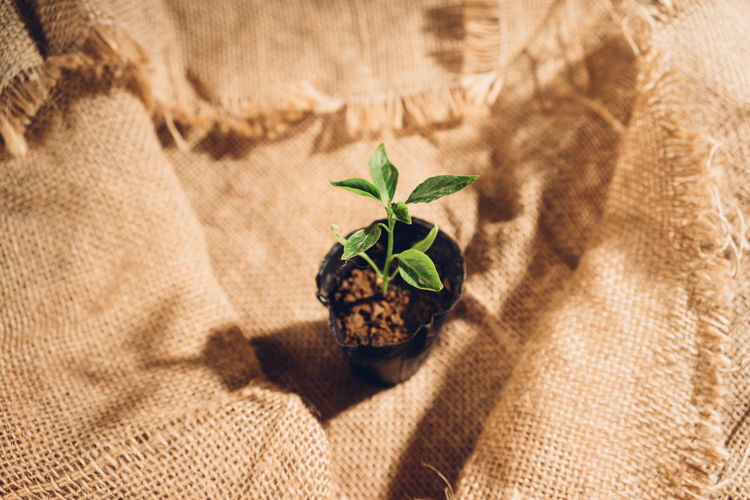 High angle view of potted plant on burlap