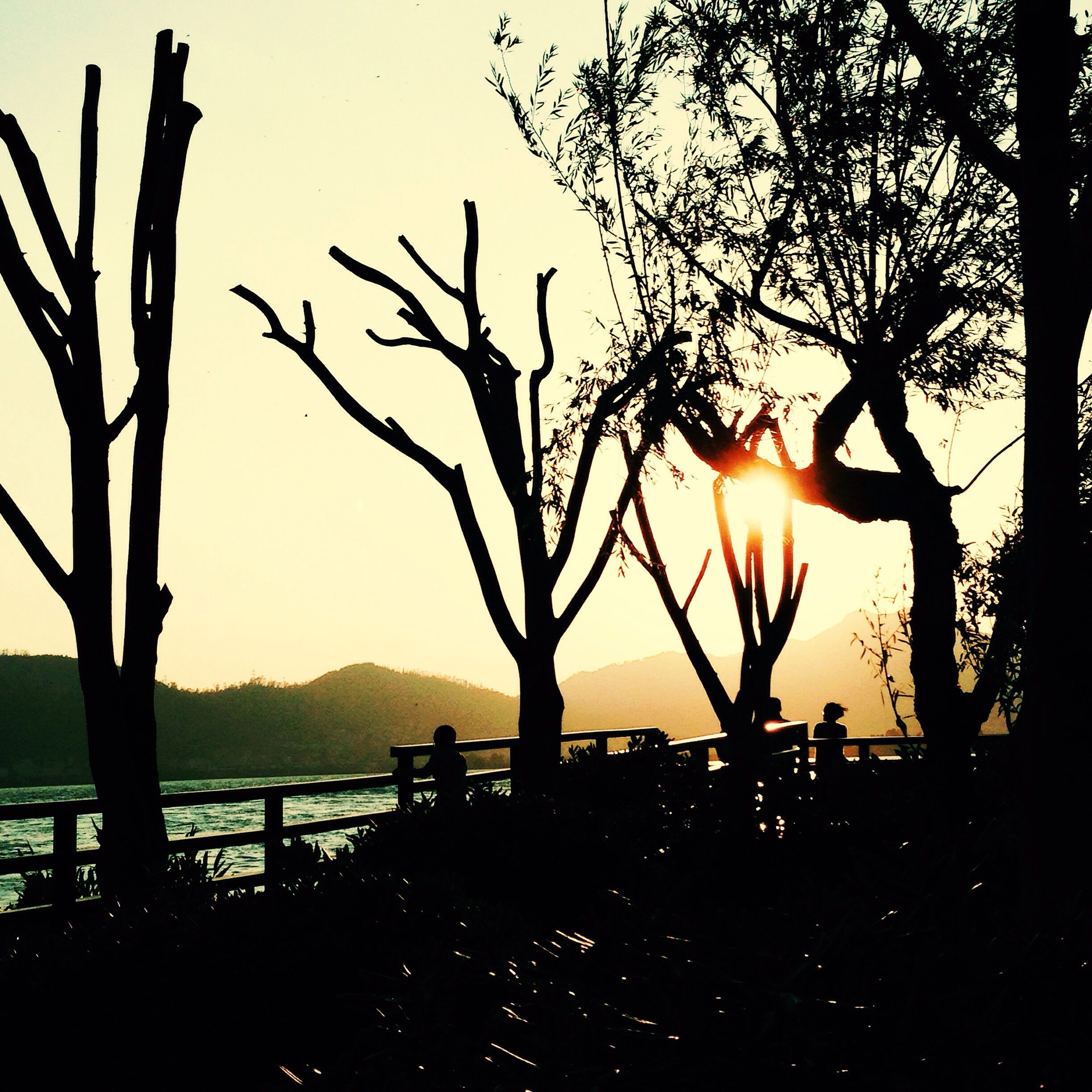 silhouette, sunset, tree, sun, scenics, tranquility, tranquil scene, water, branch, bare tree, beauty in nature, nature, tree trunk, sky, sunlight, idyllic, lake, orange color, back lit, outdoors