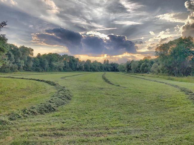 Heuwiese in den Mainauen Plant Sky Cloud - Sky Field Tranquility Land Landscape