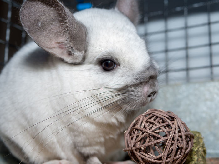 Chinchilla Wicker Ball Wicker Twig Ball Pet Animal