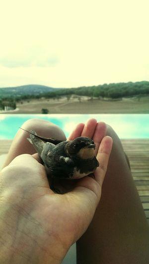 Nature Bird Love Freebird