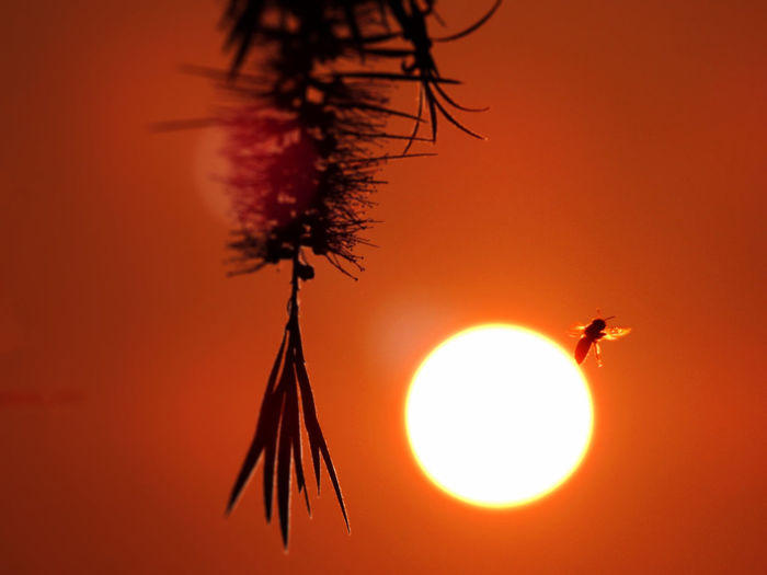 Low angle view of bee against orange sky during sunset